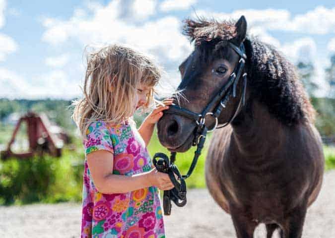 Kevätkosteus ja lämpö lupaavat huippuvuotta hevosheinän tuotannolle